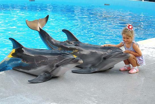 кирилловка дельфинарий
